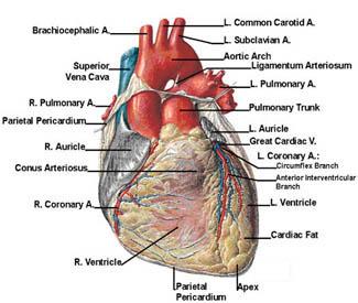 Cardiac Surgery India, Price Cardiac Surgery Mumbai India, Cardiac Surgeons India, Cardiac Care, Cardiac Surgery, Coronary Bypass, Heart Check Up, Heart Surgery, Heart Surgery Hospital, Heart Valve Replacement Surgery, Cardiac Surgery Mumbai Delhi Bangalore India
