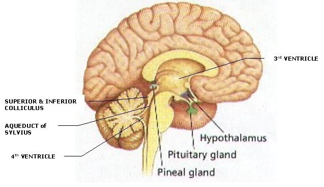 Pineal Region Tumors Surgery India,Price Pineal Region Tumors Surgery, Pineal Region Tumors, Neurosurgery, Brain Tumour, Brain Tumors, Brain Tumor Symptoms, Brain Surgery, Brain Surgeon, Brain Cancer, Brain Aneurysm, Pineal, Tumors