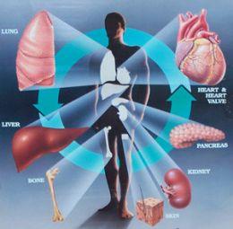 Organ Transplant India, Cost Organ Transplant Mumbai India, Organ Transplant, First Organ Transplant, Organ Transplant Ethics, Organ Transplant Mumbai India, Organ Transplant History