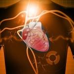 heart-and-veins-digital